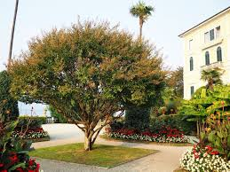bellagio hotels lake como 5 star visitsitaly com lake como and