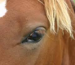 Are Horses Color Blind Vision In Horses More Than Meets The Eye Features Horsetalk Co Nz