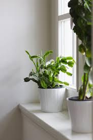 12 ways you u0027re killing your houseplants proflowers blog