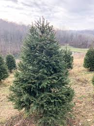 A Fun Christmas Tradition And We Cut Down Our Own Christmas Tree