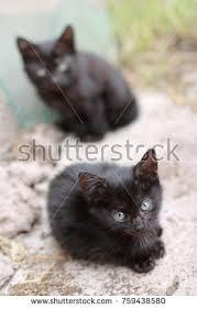 beautiful kittens two incredibly beautiful kitten open air stock photo 759438580