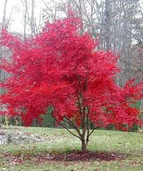 201 best small tree ideas images on pinterest