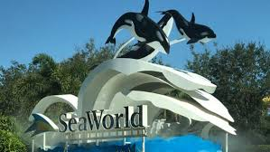 seaworld cuts 350 mostly in orlando and san diego wfla