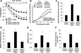 20 hete signals through g protein u2013coupled receptor gpr75 gq to