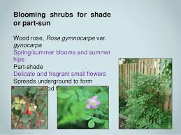 Flowering Shrubs For Partial Sun - native plant gardening through the seasons