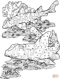 horn sharks coloring free printable coloring pages