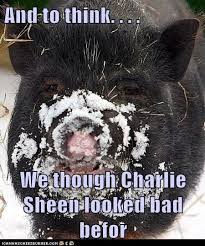 Charlie Sheen Winning Meme - i can has cheezburger charlie sheen funny internet cats cat