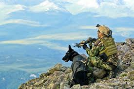 belgian shepherd special forces book review u2013 trident k 9 warriors my tale from the training