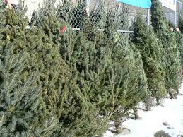 decorating awesome garden design with balsam hill christmas trees