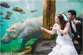 st louis photographers st louis zoo st louis wedding photographers photography