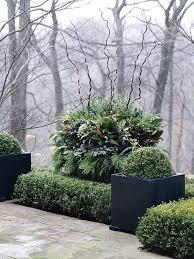 best 25 winter container gardening ideas on pinterest winter