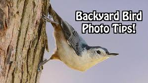 right in your own backyard here s how to shoot beautiful photographs of birds in your own