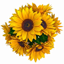 sunflower bouquet 3d model sunflower bouquet cgtrader