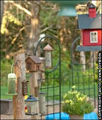 building a backyard bird haven wildlife in photography