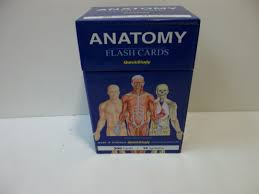 quick study anatomy flash cards gallery human anatomy learning