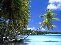 hd palm tree wallpapers and photos hd beach wallpapers