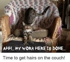 My Work Here Is Done Meme - ahh my work here is done time to get hairs on the couch meme on
