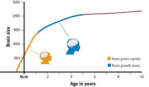 brains the smithsonian institution u0027s human origins program