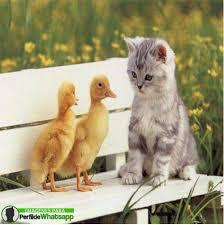 imagenes de animales whatsapp las mejores imágenes de animales para whatsapp