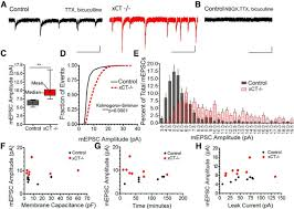 regulation of hippocampal synaptic strength by glial xct journal