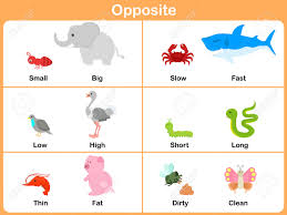 Preschool Worksheet Opposite With Animals For Preschool Worksheet For Education