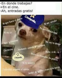Meme Chihuahua - memes perro chihuahua enojado google search huh pinterest