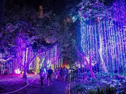 Botanical Gardens Lights Inside Look Midsummer ʻs Gleam At Foster Botanical Garden