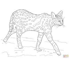 jaguarundi coloring page kids drawing and coloring pages marisa