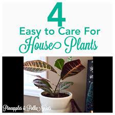 pineapples u0026 polka dots add some green 4 types of easy houseplants