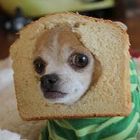 Cat Breading Meme - hot new meme breading not just for cats