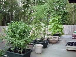 container vegetable gardening ideas