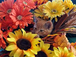 thanksgiving kitten sitting in a flower basket peeking through