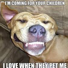 Pitbull Puppy Meme - pitbull dontjudge ilovedogs certapet love when they pet me