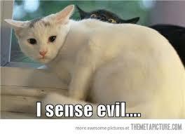Soon Cat Meme - image funny soon meme black cat jpg the world of meat logic wiki