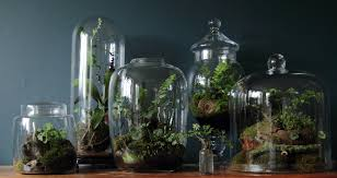 14 cool terrarium ideas that are simply amazing
