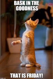 Gato Meme - cat smell gato huele latest memes imgflip