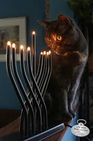 cat menorah a cat s purr spective on hanukkah and christmas with