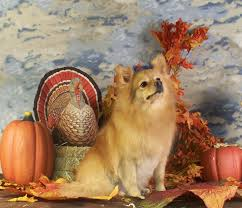 award winning grooming happy thanksgiving