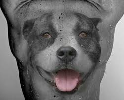 the 20 coolest pit bull tattoo designs in the world