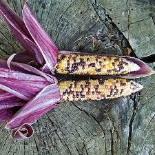 vegetables ornamental corn husk spectrum pkt