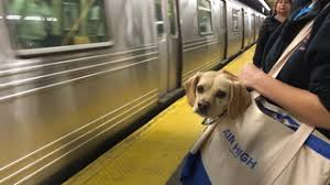 How Do Blind Dogs Know Where To Go The Dodo For Animal People