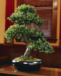 best 25 bonsai artificial ideas on galho de árvore
