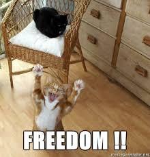 Freedom Meme - freedom cat