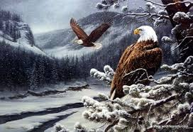 strange eagle wallpapers eagle art art u0026 abstract images pinterest