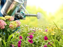 roll out vegetable garden gardening archives reader u0027s digest