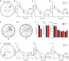 frontiers loss of fmrp impaired hippocampal long term plasticity