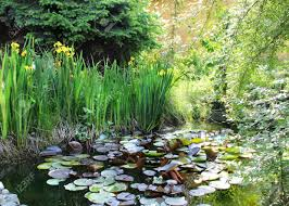 Small Beautiful Pics House Beautiful Garden With Small Pond Stock Photo Picture And