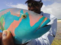 ikari house fly fishing lodges and trips