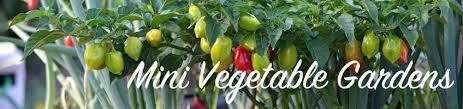 buy mini vegetable gardens online bakker com
