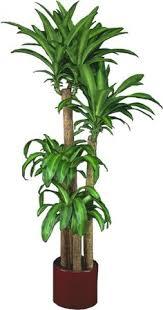 Low Light Indoor Trees Indoor Plants Of Steel Low Lights Lights And Plants